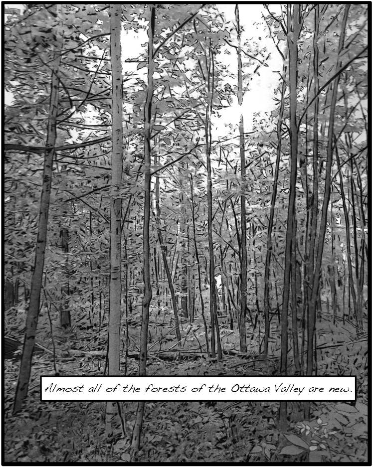 Almost all of the forests of the Ottawa Valley are new